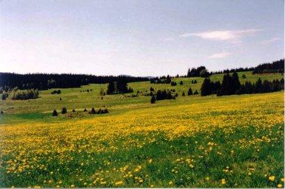 Pohledna rozkvetlou louku u Švehlíkovy chaty